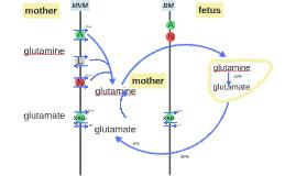 Copy of larger glutamine/glutamate diagram