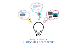 Hawks Bill Sea Turtle