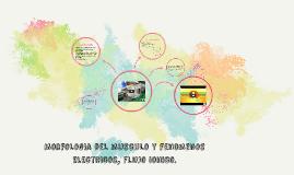 Morfologia del musculo y fenomenos electricos, flujo ionico.