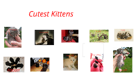 The Cutest Kittens