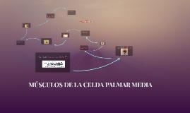 MÚSCULOS DE LA CELDA PALMAR MEDIA