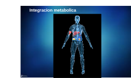 Integracion metabolica