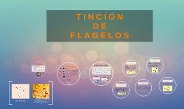 TINCIÓN DE FLAGELOS
