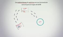 Las endonucleasas de restricion son una herramienta esencial