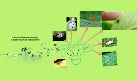 Copy of Comparación de enfermedades y plagas en frutales de pepita y