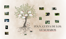 P.N.N. CUEVA DE LOS GUACHAROS