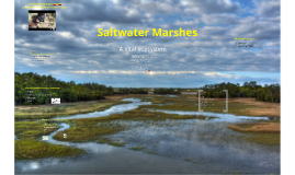 Saltwater Marshes