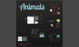 Copy of 1TTO Animals