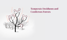 Temperate Deciduous and Coniferous Forests
