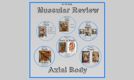ATTR 210L - Axial Muscular Review