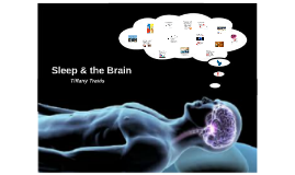 Sleep & the Brain