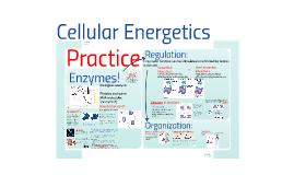AP Bio- Energy 3:  Cellular Energetic Practice