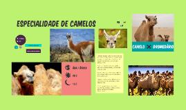 Especialidade de Camelos