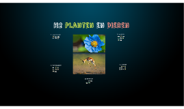 Planten en Dieren klas 3