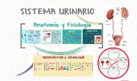Copia de Copy of SISTEMA URINARIO