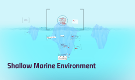 Shallow Marine Enviroment