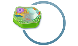 Organelles Specific to Certain Types of Cells