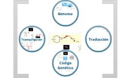 Genoma, transcripción, traducción, código genético