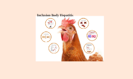 Inclusion Body Hepatitis