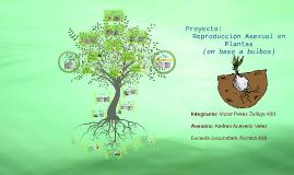 Vegetativa asexual spores