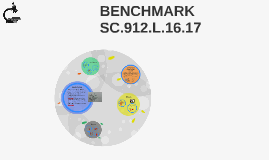 BENCHMARK SC.912.L.16.17