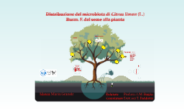 Copy of Growing Tree Education