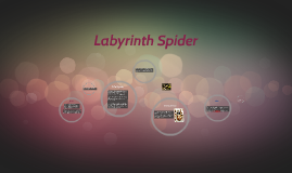 Labyrinth Spider