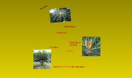 division of plants