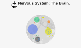 Nervous System: The Brain.