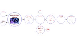 Exponentieel verband Havo A 2017