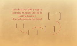 A sinalização de BMP-4 regula a formação da Bainha Epitelial