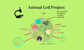 Animal Cell Project, STEM