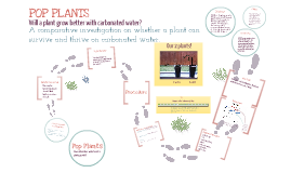 Copy of Plant Investigation: Will a Plant Grow Better With Carbonated Water?
