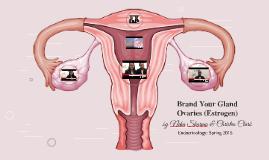 Brand Your Gland: Ovaries (Estrogen)