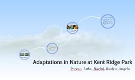 Adaptations in Nature at Kent Ridge Park