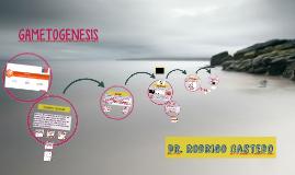 Copy of GAMETOGENESIS