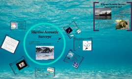 Copy of Marine Acoustic Surveys