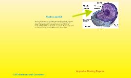 Organelles Working Together