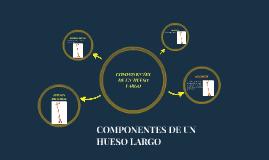 COMPONENTES DE UN HUESO LARGO