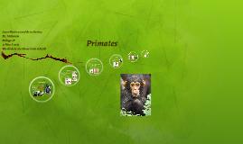 Primates Presentation