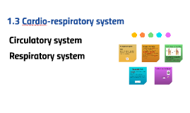 1.3 Cardio-respiratory system