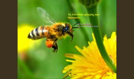 TU: Een lokale oplossing voor Bijensterfte