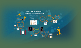 CLASIFICACIÓN DEL SISTEMA NERVIOSO (SNC, SNP,SNA).