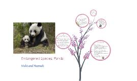Endangered Species: Panda