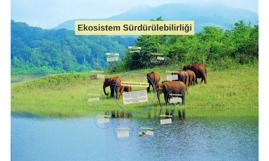 Ekosistem Sürdürülebilirliği