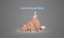 Copy of Lamina Superficial