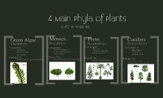 4 Main Phyla of Plants