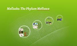 Mollusks: The Phylum Mollusca