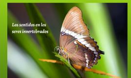 Órganos de los sentidos en Invertebrados.
