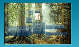 PROF-Planos Regionais de Ordenamento Florestal